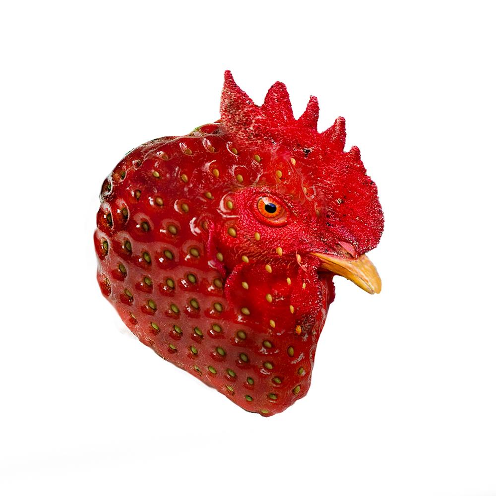 """Särk """"Chicberry"""" (selftasy)"""